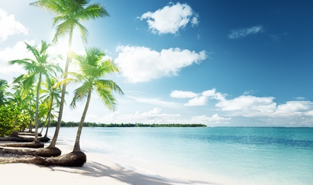 caribbean: palms and Caribbean beach