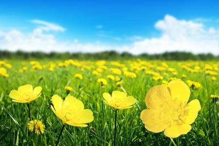 Gebied van de lente bloemen en perfecte zonnige dag Stockfoto
