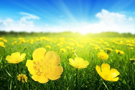 Campo de flores da primavera e perfeito dia de sol