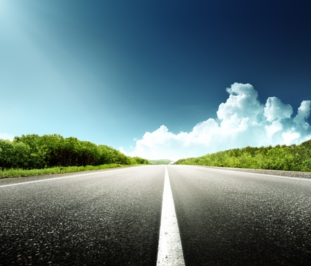 road: road in forest