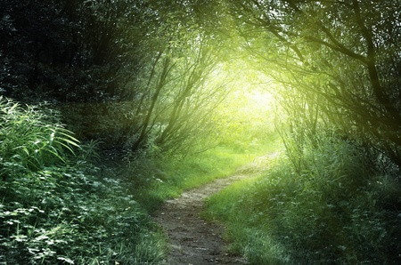 magic mystery: way in deep forest Stock Photo