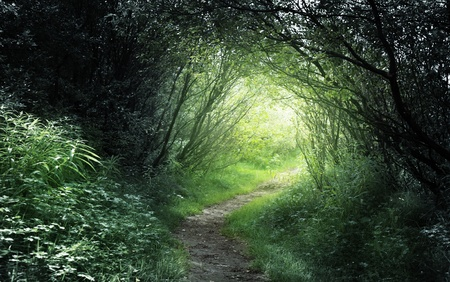 way in deep forest photo