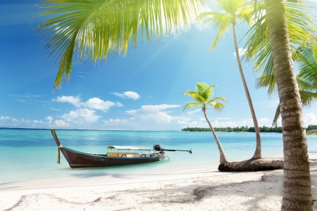 sea, coconut palms and boat photo