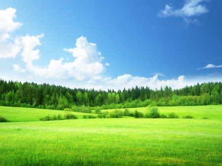 clear sky: field and forest in spring time Stock Photo