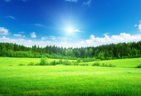 field and forest in spring time Stock Photo