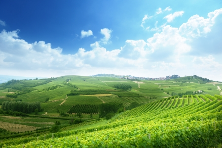 vineyards in Piedmont, Italy photo