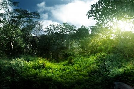 africa jungle: sunset in jungle, seychelles