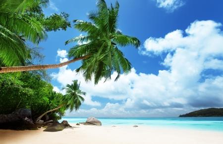 beach on Mahe island in Seychelles 版權商用圖片 - 16113507