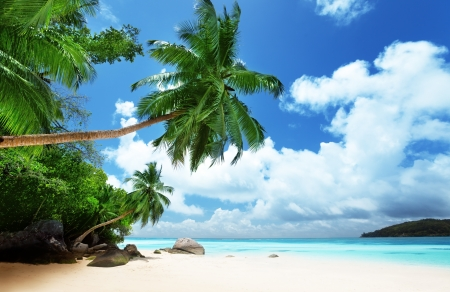 beach palm: beach on Mahe island in Seychelles  Stock Photo