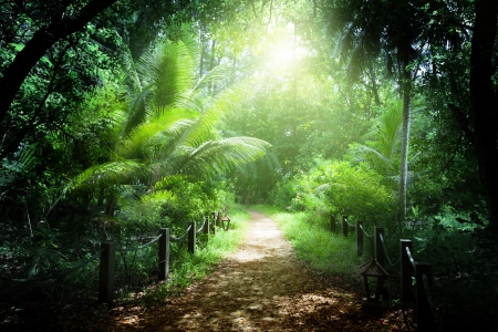 dark jungle green: way in jungle of Seychelles islands Stock Photo