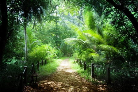 way in jungle of Seychelles islands photo