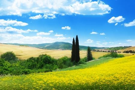 Bereich der gelben Blumen Toskana, Italien