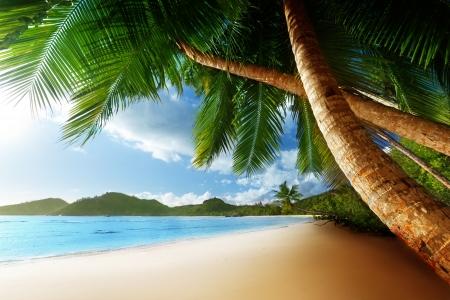 sunset palm trees: sunset on beach Anse Takamaka of Mahe island, seychelles Stock Photo
