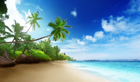 sunset palm trees: beach in sunset time on Mahe island in Seychelles Stock Photo