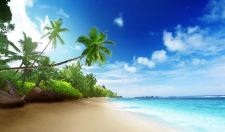 palmeras: playa en la puesta del sol en la isla Mahe en las Seychelles