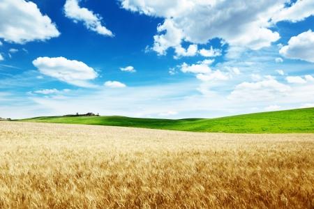 weizen ernte: Weizen H�geln der Toskana, Italien Lizenzfreie Bilder