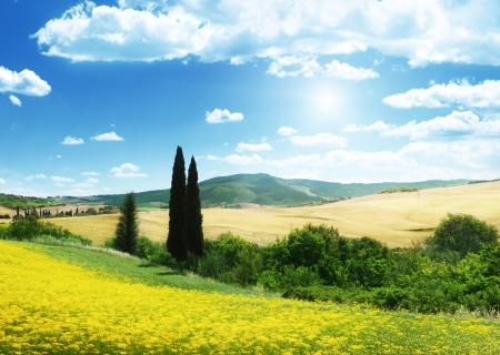 toscana: field of yellow flowers Tuscany, Italy