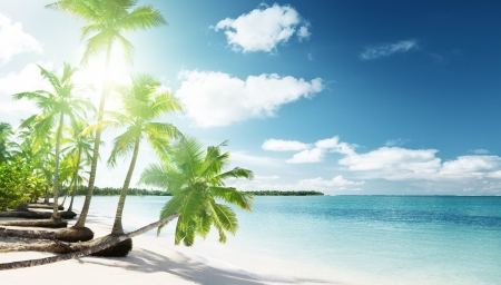 caribbean beach: palms and Caribbean beach