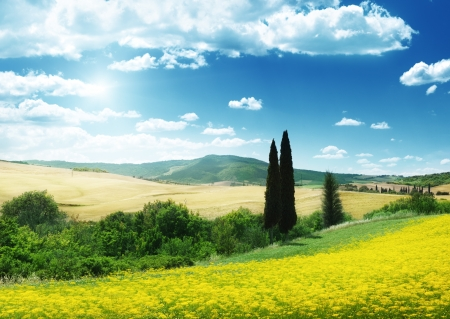 field of yellow flowers Tuscany, Italy  photo