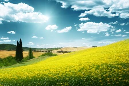 vast: field of yellow flowers Tuscany, Italy
