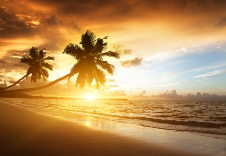 palm fruits: sunset on the beach of caribbean sea