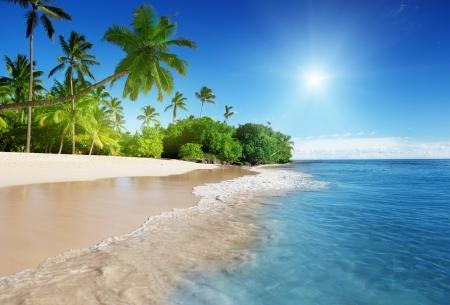 Caribische zee en palmen