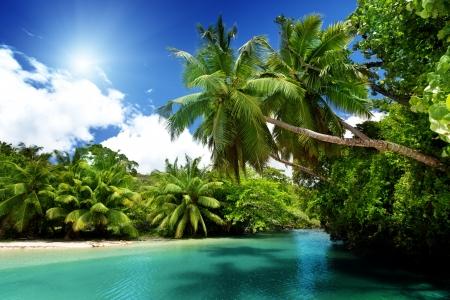 seychelles: lake and palms, Mahe island, Seychelles