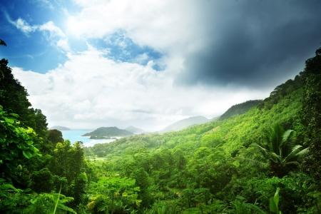 jungle scene:  jungle of seychelles island Stock Photo