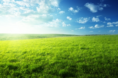 field of spring grass and forest Stock Photo - 17411902