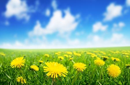 Champ de fleurs printanières et parfaite journée ensoleillée
