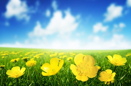 Field of spring flowers and perfect sunny day Stock Photo - 17477350