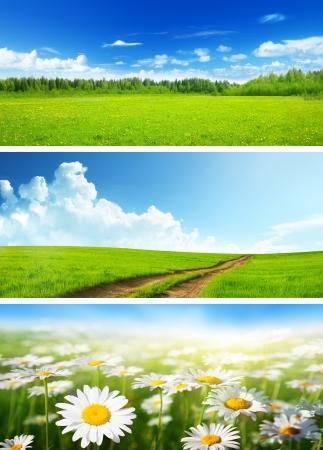horizonte: banderas de los campos de primavera y las flores