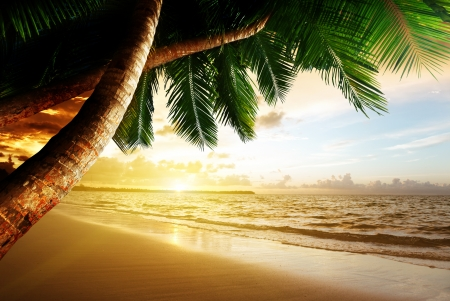palm fruits: sunrise on Caribbean beach