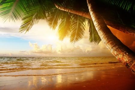 sunset palm trees: sunrise on Caribbean beach
