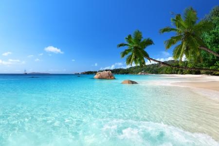 feuille arbre: Anse Lazio plage de l'?le de Praslin, Seychelles
