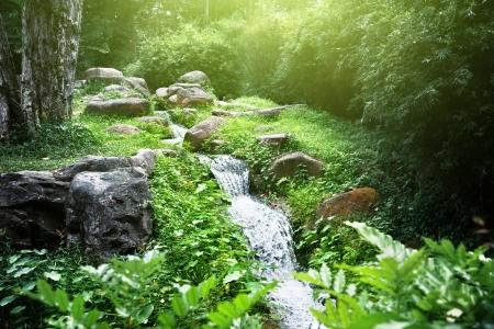 river in jungle Stock Photo - 18819043