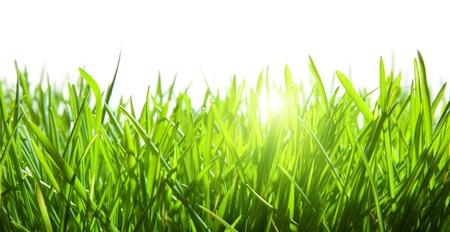白で隔離される緑の芝生
