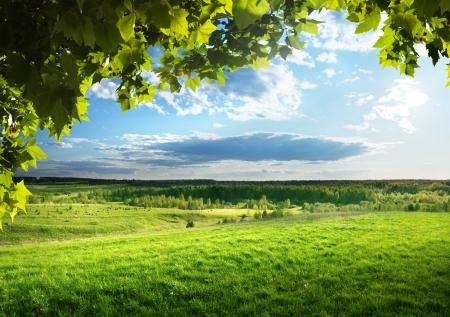 granja: campo de hierba de la primavera y el bosque
