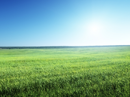 grass country: field of spring grass