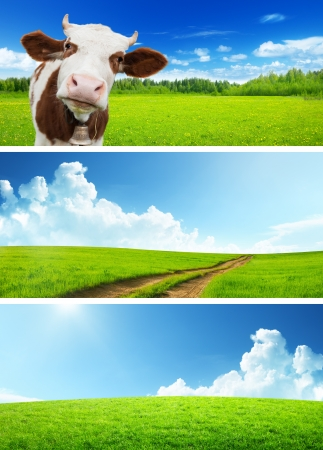 cow head: set of spring banners Stock Photo