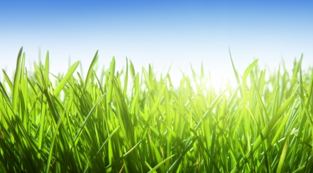 meadow: green grass and blue sky