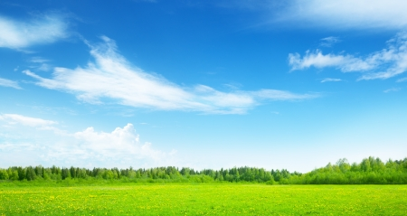 green field: field of spring grass and perfect sky Stock Photo