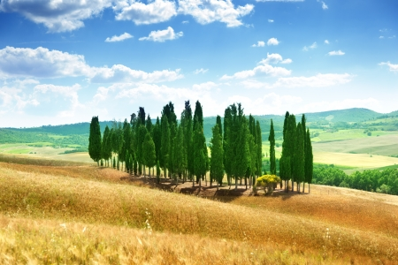 val d'orcia: trees in Val dOrcia, Tuscany