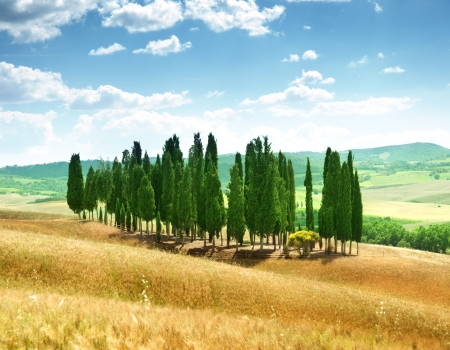 orcia: trees in Val d Orcia, Tuscany Stock Photo