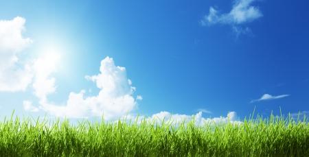 晴れた日で草します。