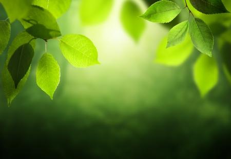 Voorjaar bos achtergrond Stockfoto - 20196164