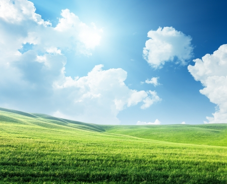 blue sky: field of spring grass and sunny day Stock Photo