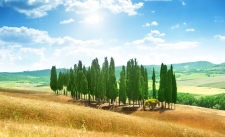 orcia: trees in Val dOrcia, Tuscany