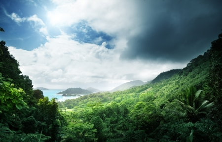 dark jungle green: jungle of seychelles island