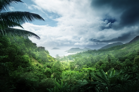 Jungle van de Seychellen eiland Stockfoto - 20429601